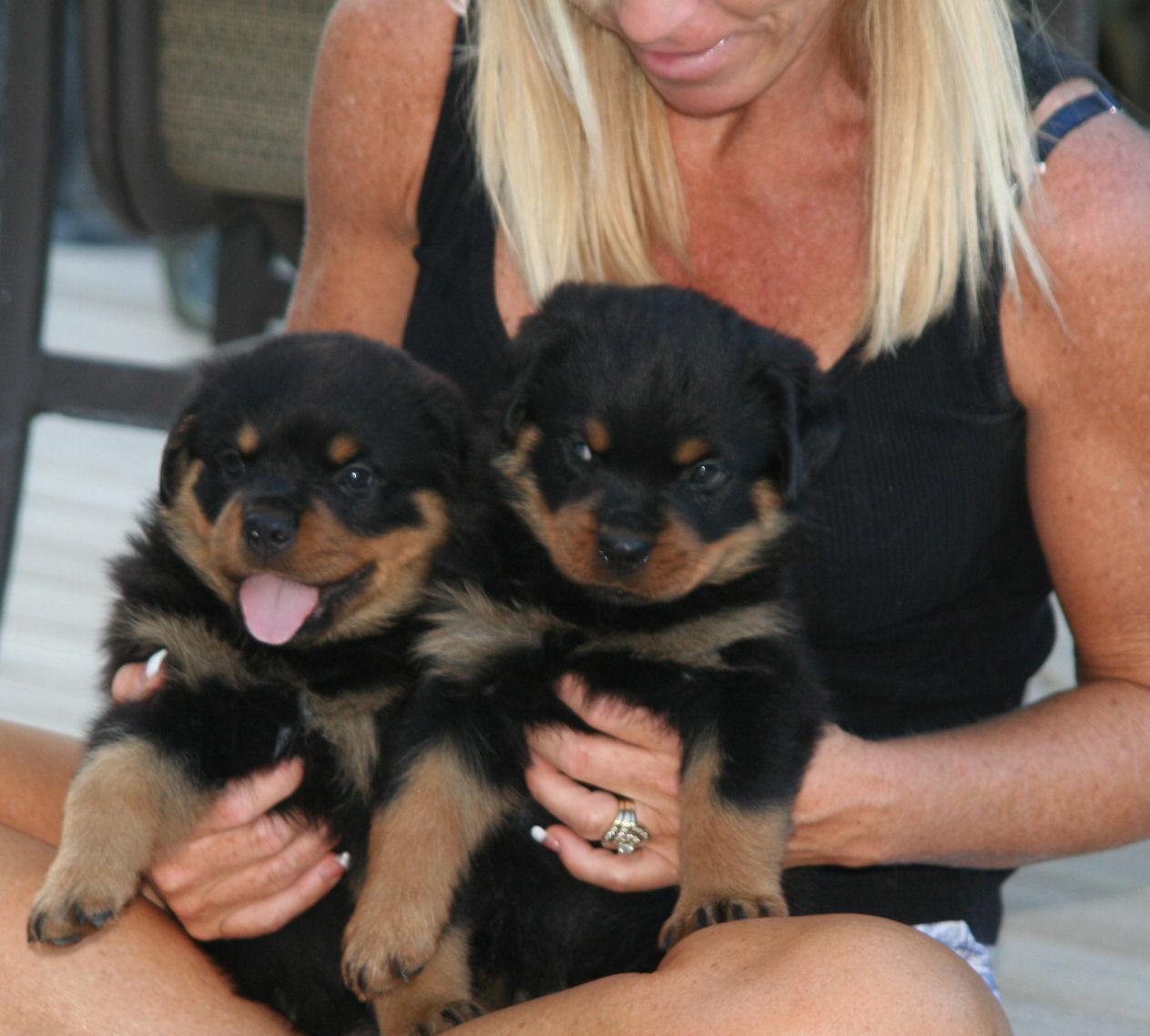 Rottweiler And American Rottweiler What Is The Difference Rottweiler ...